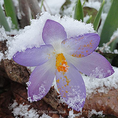 SnowShawl_AlisonShull_031913