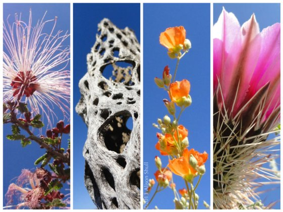 Desert In Bloom by Alison Shull