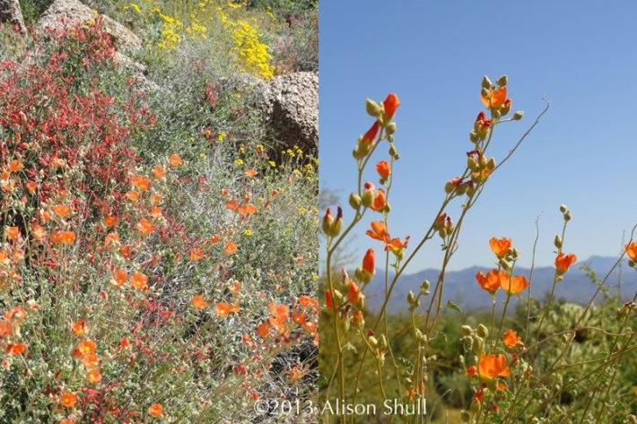 Desert In Bloom by Alison Shull