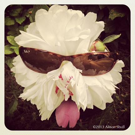 Woof Shade Peony - flower sculpture photography by Alison Shull