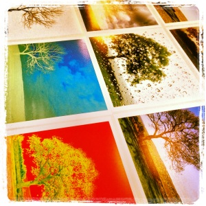 Printing The Tree - photography by Alison Shull