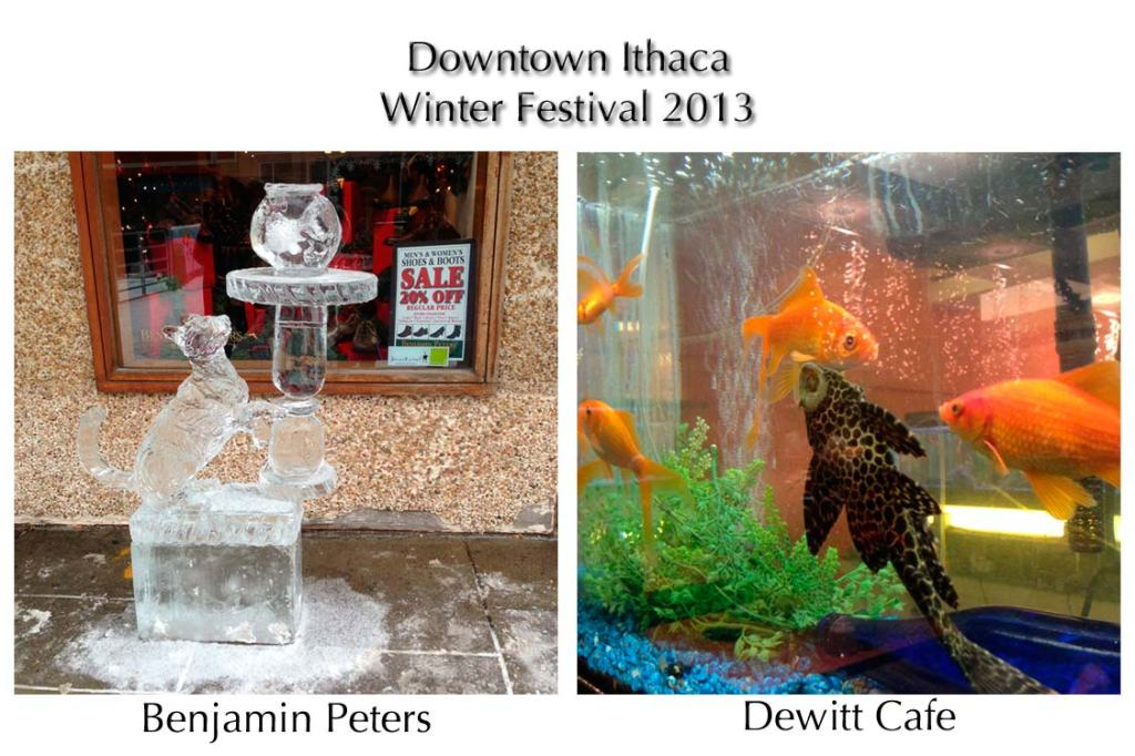 Fish in ice in water at the 2013 Winter Festival in Ithaca NY - photos by Alison Shull