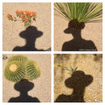 Desert Shadow Art - photography by Alison Shull
